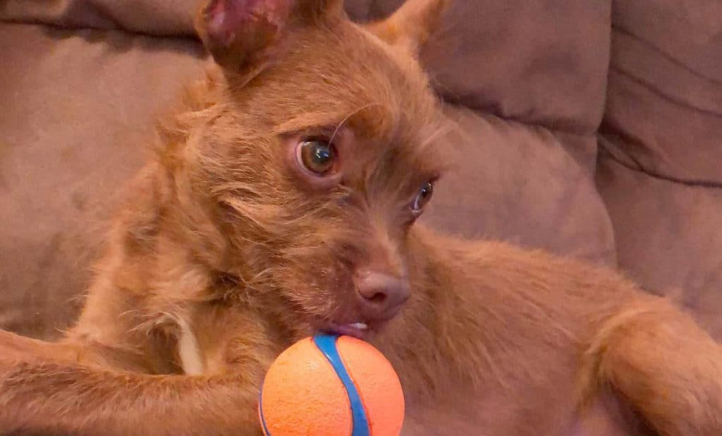 bossi-poo-dog-play